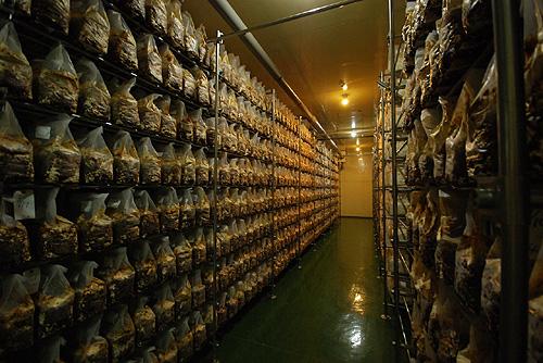 菌床の培養室